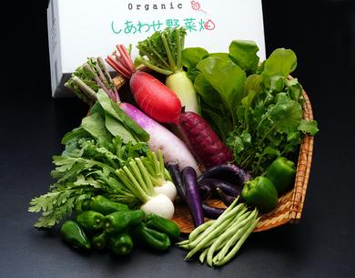 オーガニック農園 しあわせ野菜畑